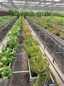 生产无土栽培设备