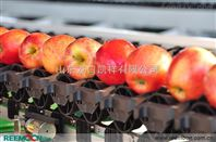 水果清洗打蠟機,30年老廠家專業研發