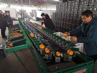 沃柑选果机 蒲江柑橘重量分选大小