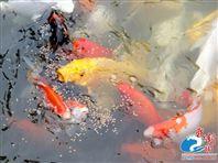 湿法宠物饲料-水产食品生产线