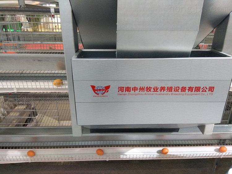 蛋鸡笼价格 优质鸡笼批发 层叠阶梯热镀锌