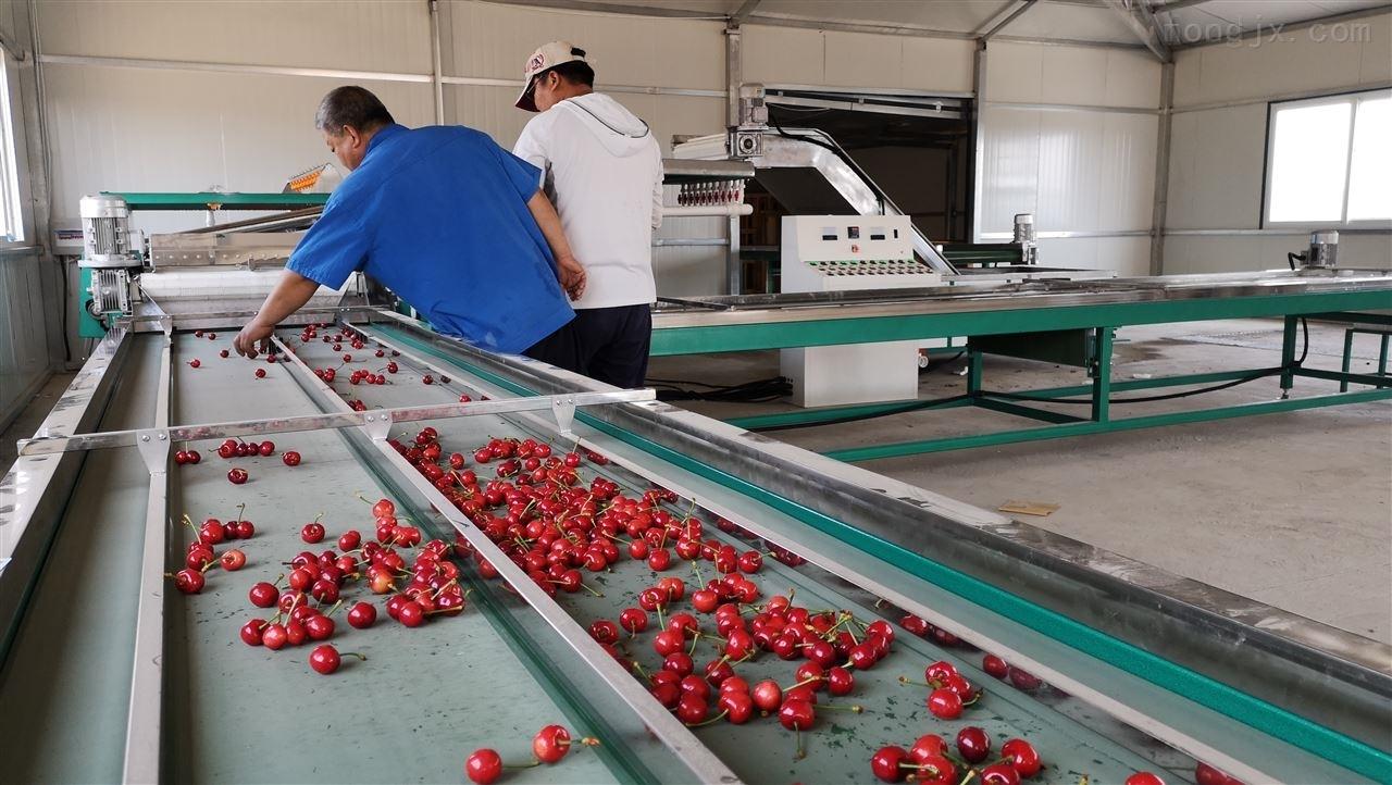 樱桃分级机,大樱桃采后分级包装设备