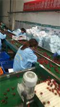 三代制造葡萄套袋加工机器,生产葡萄袋的机器,凯祥全自动葡萄套袋机
