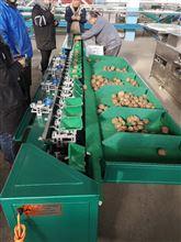 XGJ-DN猕猴桃智能选果机厂家 热销猕猴桃重量分选机