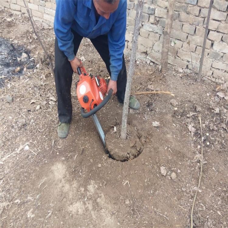 苗圃起树机 三分钟苗木断根机 圆土球挖树机