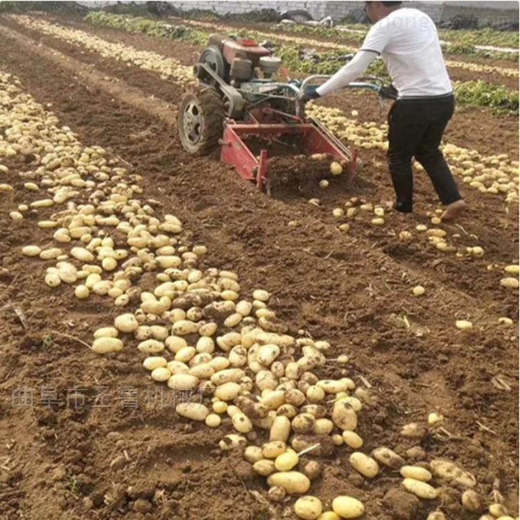 山西手扶马铃薯红薯收获机