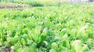全国蔬菜生产机械化技术试验示范工作经验交流会在沪召开