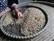 大豆种业专家论坛在哈尔滨召开