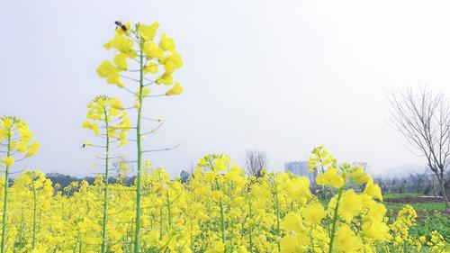 推进农产品加工转型升级 打造乡村产业振兴新引擎