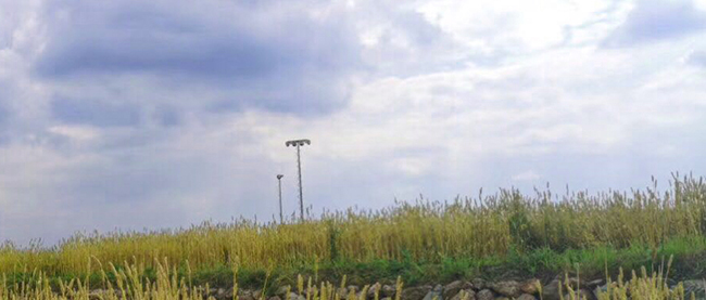 种粮收入低,农民不愿种地,如何解决这一困境?