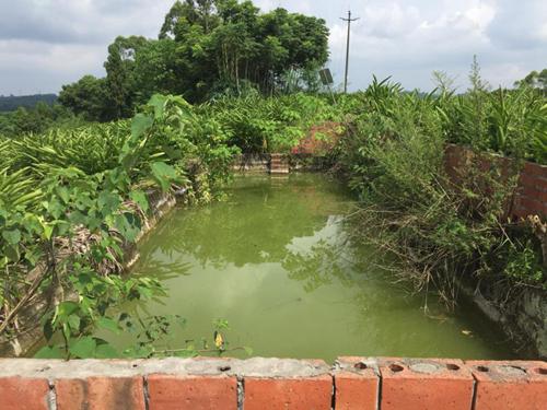集約化規模養豬場高濃度污水處理 生豬養殖規?;?、無害化、綠色化發展