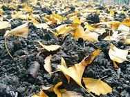 每畝補助25元,河南省2019年農機深松整地1300萬畝
