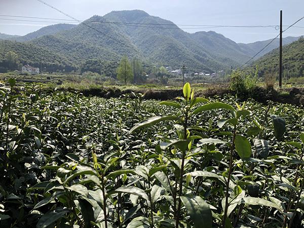 浙江省通报2019年上半年农机购置补贴实施进度