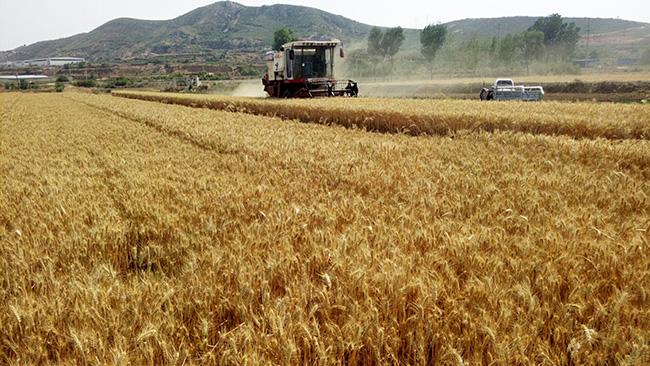 每畝補助500元!河北省2019年將在47個縣(市、區)實施輪作休耕制度試點工作