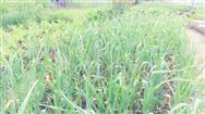 我国农药残留限量标准增至7107项