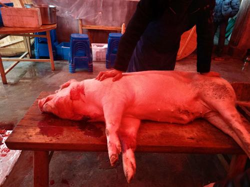 """""""中秋""""""""国庆""""两节临近,猪肉供应情况如何?"""
