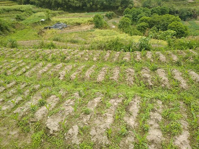 放活农村土地经营权,稳步推进农村土地流转
