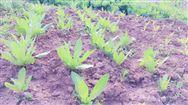 大連對四種保護性耕作方式進行獎補
