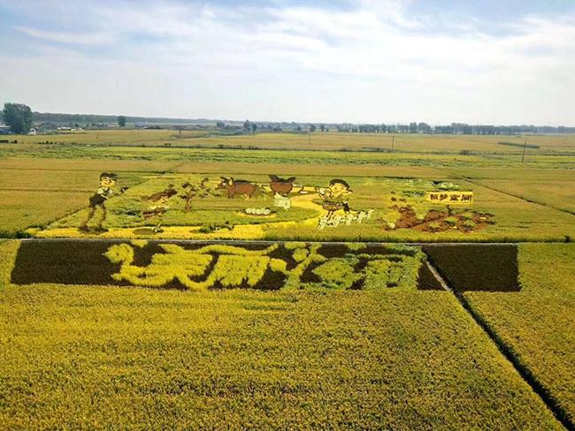 江西省关于开展2019年农机推广鉴定证书有效期内农机产品监督检查的通知