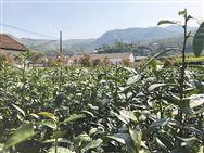 重慶市關于對重慶市富農農機公司等5家農機產銷企業違規經營行為處理的通知