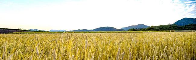 农机企业看过来,重庆市农机补贴投档注意事项!(附失信企业名单)