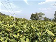 黑龙江省关于未办理落户手续农机装备安装农机智能监测装置有关事宜的通知