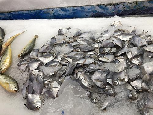 第24屆中國國際漁業博覽會在青島舉行