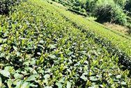 农业农村部办公厅关于开展农产品冷链物流基础设施建设情况摸底调查的通知
