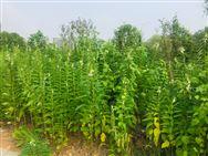人力资源社会保障部 农业农村部印发《关于深化农业技术人员职称制度改革的指导意见》
