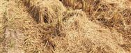甘肃省永利皇宫官网2019年第四批农业机械试验鉴定结果的通报
