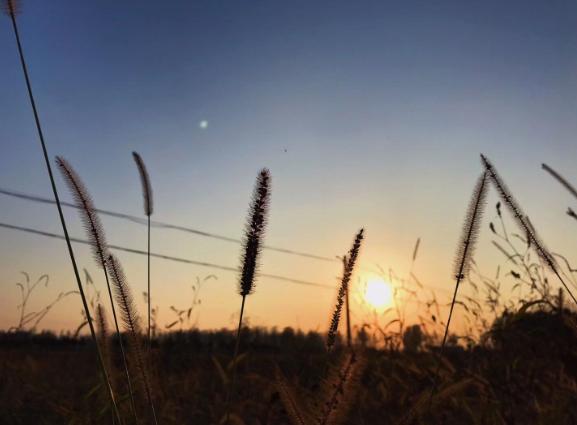 黑龙江省2019年度植保无人飞机和啪啪社区手机版新产品购置补贴试点产品自主投档信息公示的通知