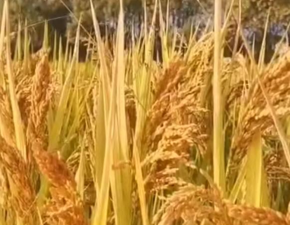 总额三千万!安徽省开展连栋温室农机新产品补贴试点工作