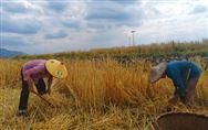 百万高素质农民学历提升行动计划推进会在江苏召开