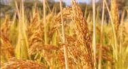 内蒙古关于农机购置补贴部分企业补贴产品违规行为处理决定的通知