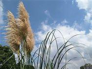 甘肃省下达2020年农业生产发展专项转移支付资金计划,补助额合计343377元