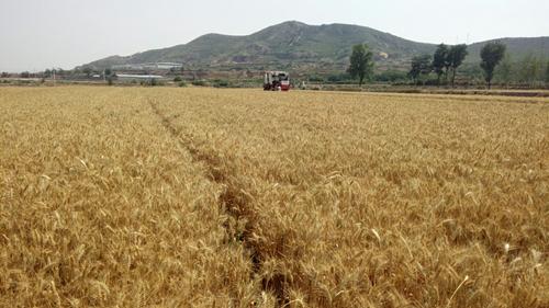 农业农村部召开安全生产委员会(扩大)会议