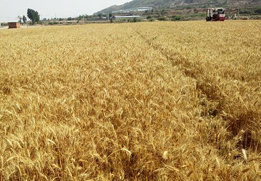 七項措施做好2020年夏季糧油收購工作