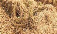 陕西省安排2390万元对农作物秸秆综合利用项目进行补助