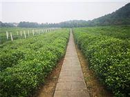 浙江公布2020年农业重大技术协同推广计划试点实施方案