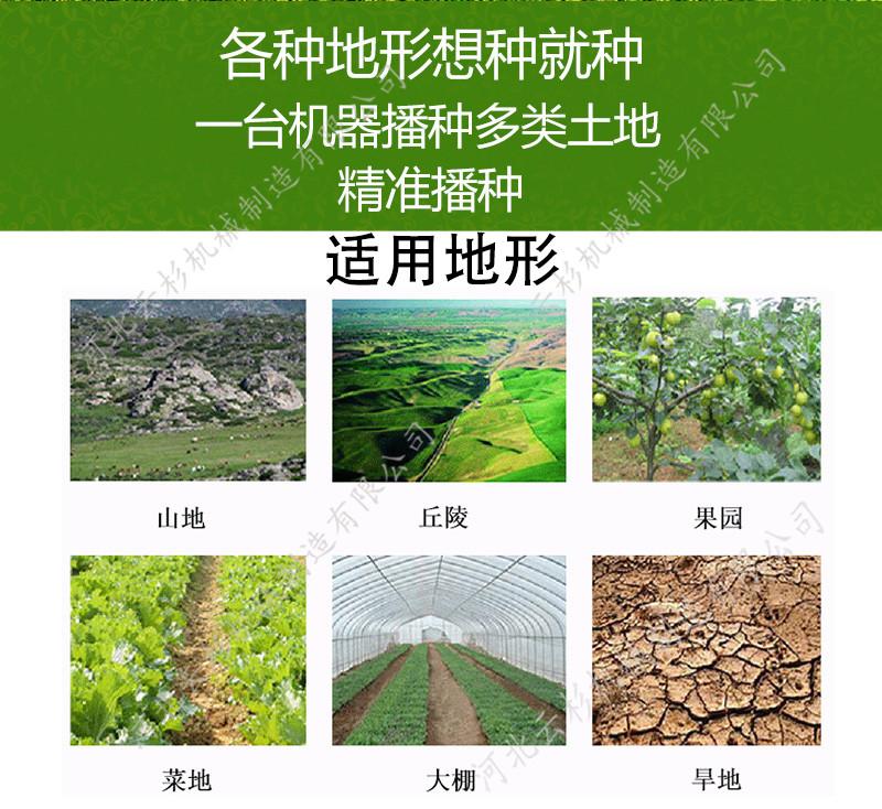 v系带系带精播种机格纹蔬菜裙裤图片